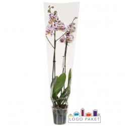 Пакеты-трапеция с подпайкой для цветов